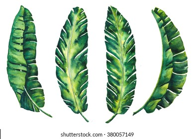 banana leaves tropical exotic leaf  watercolor for your created design wallpaper vintage Hawaii style isolated on white background illustration