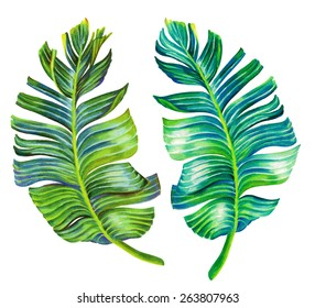 banana palm leaves. single isolated hand drawn detailed motifs, illustration in vintage botanic style. on white background.