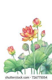 Banner, border of pink Indian lotus (water lily) flower with leaves, seed head, bud. Watercolor hand drawn painting illustration isolated on white background.