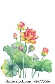Lotus Leaf Images Stock Photos Vectors Shutterstock