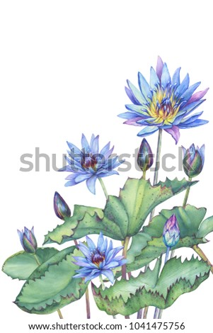 Banner Poster Pink Egyptian Lotus Flower Stock Illustration