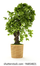 Banyan or ficus bonsai tree isolated over white