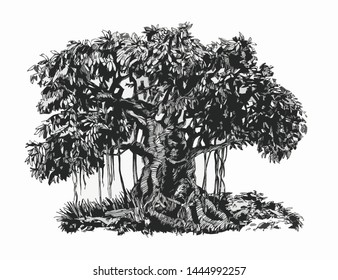 Banyan tree. Ink drawing. Bonsai in the forest.