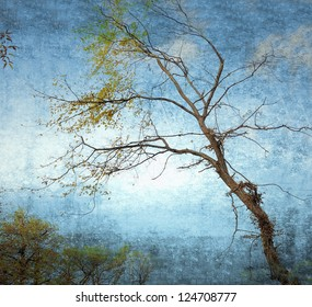 Bare branches on grunge sky background