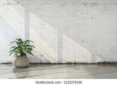 Bare loft conversion with large potted plant in front of a grunge white painted brick wall and concrete floor lit from the side by sunlight from a window. 3d render