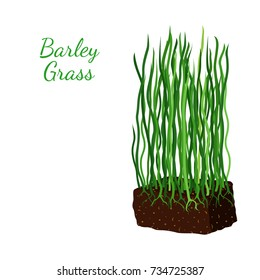 Barley grass, wheat. Vegetarian food, organic nutrition. Made in cartoon flat style