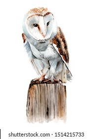 Barn owl sitting on a perch painted in watercolour
