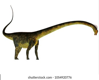 Barosaurus Dinosaur Side Profile 3D illustration - Barosaurus was a herbivorous sauropod dinosaur that lived in Utah and South Dakota, USA in the Jurassic Period.