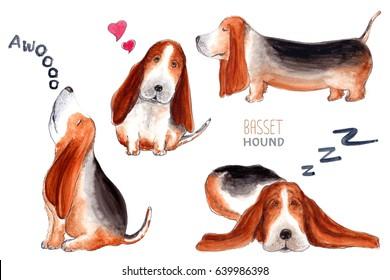 Basset Hound character, dog emotion and feeling, howl, love, sleep, walk.