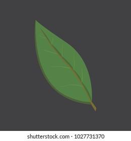 bay leaf, isoalted illustration. Gerb bay leaf