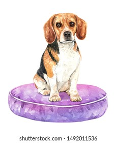 Beagle dog. Portrait of a dog. Watercolor hand drawn illustration.Watercolor 	 Beagle sitting on pillow layer path, clipping path isolated on white background.