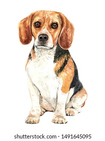Beagle of a dog. Watercolor hand drawn illustration. Watercolor Beagle sitting layer path, clipping path isolated on white background.