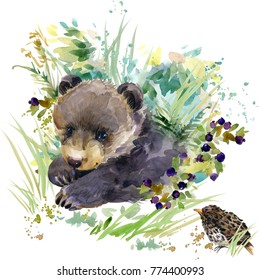 bear cub. forest animals watercolor illustration