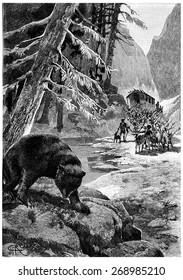 The bear shook his big head one last time, vintage engraved illustration. Jules Verne Cesar Cascabel, 1890.