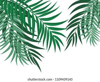 Beautifil Palm Tree Leaf  Silhouette Background  Illustration
