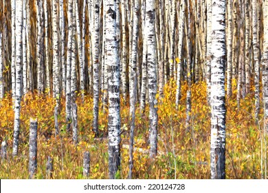 Beautiful aspen trees (Populus tremuloides) showing off their colors in autumn. Image is rendered as if it was an oil painting.