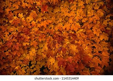 Beautiful autumn maple tree. 3D rendering