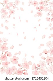 Beautiful background material of the full-blown cherry tree and shower of cherry blossoms