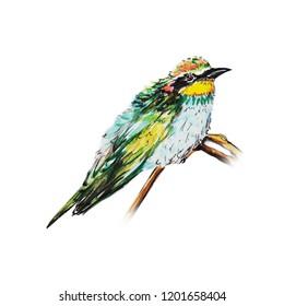 beautiful bird water color