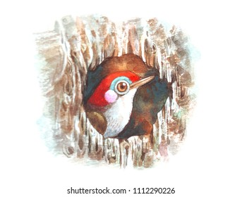 beautiful bird in wood hollow watercolor painting illustration  for books illustration decoration greeting cards