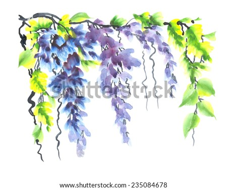b9539e8205c Beautiful blooming wisteria branch with leaves . Watercolor oriental style  painting illustration .