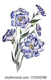 Beautiful blue eustoma (Lisianthus) on white background. Watercolor painting. Hand drawn. Can be used for greeting cards, cloth printing, fabric.