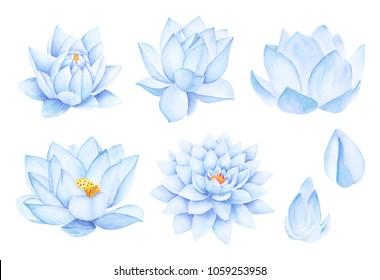 Beautiful Blue Lotus Flowers. Watercolor illustration. Pure Water Blossom. Yoga, Zen Meditation Symbol. China and Japan Symbol.
