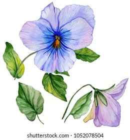 Beautiful botanic set (blue and purple viola flowers and leaves). Colorful violet flower and green leaves isolated on white background. Watercolor painting. Hand painted floral illustration.