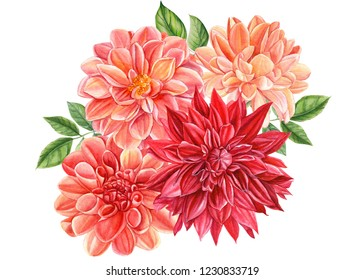 beautiful bouquet of flowers  dahlia isolated on a white background, watercolor illustration, botanical art