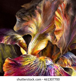 Beautiful  bright and rich exotic flower iris on black background.  Realistic drawing  on paper texture - hand illustration with digital processing.