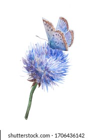 Beautiful butterfly on a blue flower. Watercolor drawing of a butterfly on a cornflower. Blue butterfly on a spherical blooming flower with many petals. Watercolor drawing of nature.