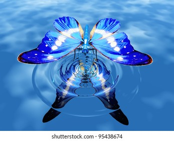 the beautiful butterfly on water