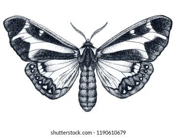 Beautiful Butterfly tattoo. Dysschema howardi. Mystical symbol of freedom, beauty, perfection. Dotwork tattoo
