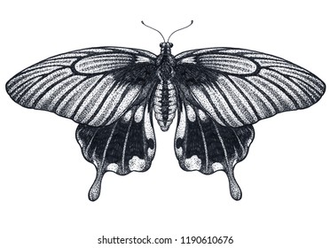 Beautiful Butterfly tattoo sketch. Tropical Butterfly. Papilio Memnon. Dotwork tattoo. Traditional black dot style ink. Mystical symbol of freedom, nature, beauty, perfection. Graphic arts.