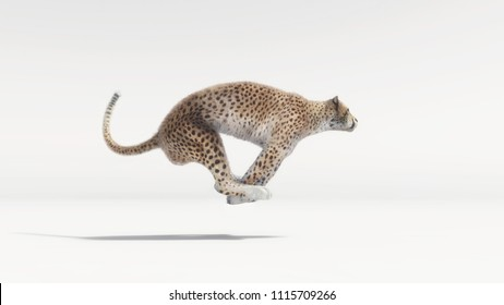 A beautiful cheetah running on white background - 3d render illustration