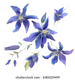 Beautiful clematis blue  flowers composition isolated on white.