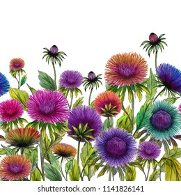 Beautiful colorful aster flowers with green leaves on white background. Seamless floral pattern. Watercolor painting. Hand drawn and painted illustration. Fabric, wallpaper, bed linen design.