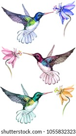Beautiful colorful hummingbirds drink flower nectar. Isolated on white background. Collection of exotic tropical birds with vivid feathering. Watecolor painting. Hand drawn and painted.