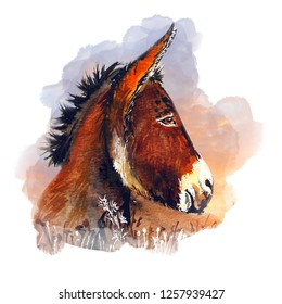 Beautiful donkey water color illustration