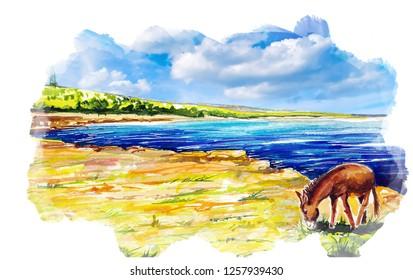 Beautiful donkey water color illustration