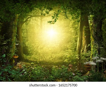 Beautiful enchanting magical lush woodland leading to a heavenly light, 3d render.