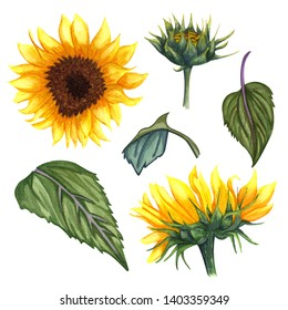 Beautiful floral collection with sunflowers,leaves,branches,fern leaves. Bright watercolor sunflowers clip art set. wedding, invitation, template card, Birthday.