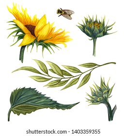 Beautiful floral collection with sunflowers,leaves,branches,fern leaves. Bright watercolor sunflowers clip art set. Perfect for wedding, invitation, template card, Birthday.