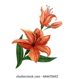 Beautiful  flower Lily.