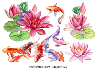 beautiful flowers pink lotus and koi fish on white background, watercolor illustration, hand drawing