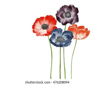 Beautiful flowers watercolor illustration. Anemone flower.