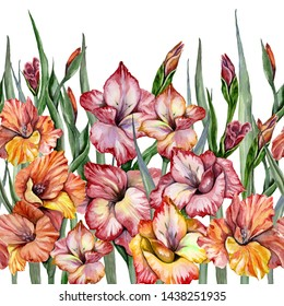 Beautiful gladiolus flowers with leaves on white background. Seamless exotic floral pattern, border. Watercolor painting. Hand painted illustration. Fabric, wallpaper, bed linen, greeting card design.
