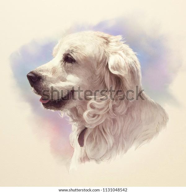 Beautiful Golden Retriever Portrait Guide Disability Stock