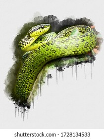 Beautiful Green Black Snake. Beautiful Digital watercolour painting of Snake. Isolated painting of Exotic Snakes. Endangered Animal Abstract Paintings Wallpaper. Portrait of Snake