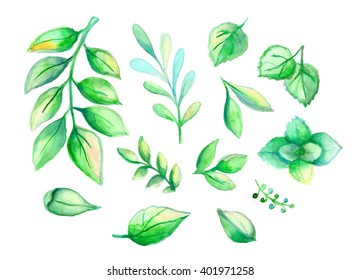 Beautiful green and blue watercolor leaves and mint collection isolated
